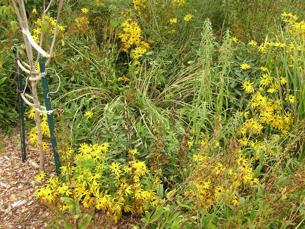 Tennessee Smart Yards Native Plants A Comprehensive Database Of