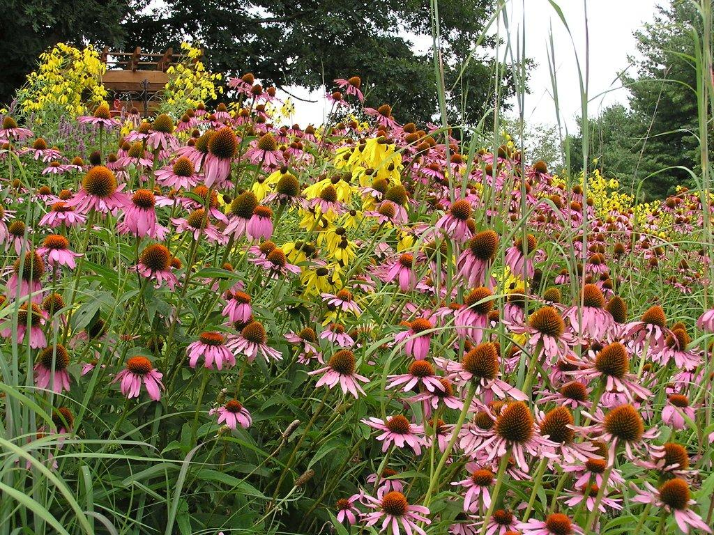 Tennessee Smart Yards Native Plants