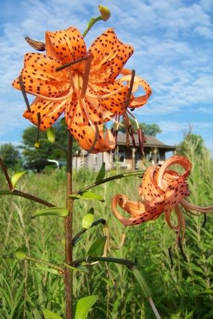 Photo Courtesy of Keith & Patty Horn, Horn's Prairie Grove, email: kahplh_hiland@yahoo.com