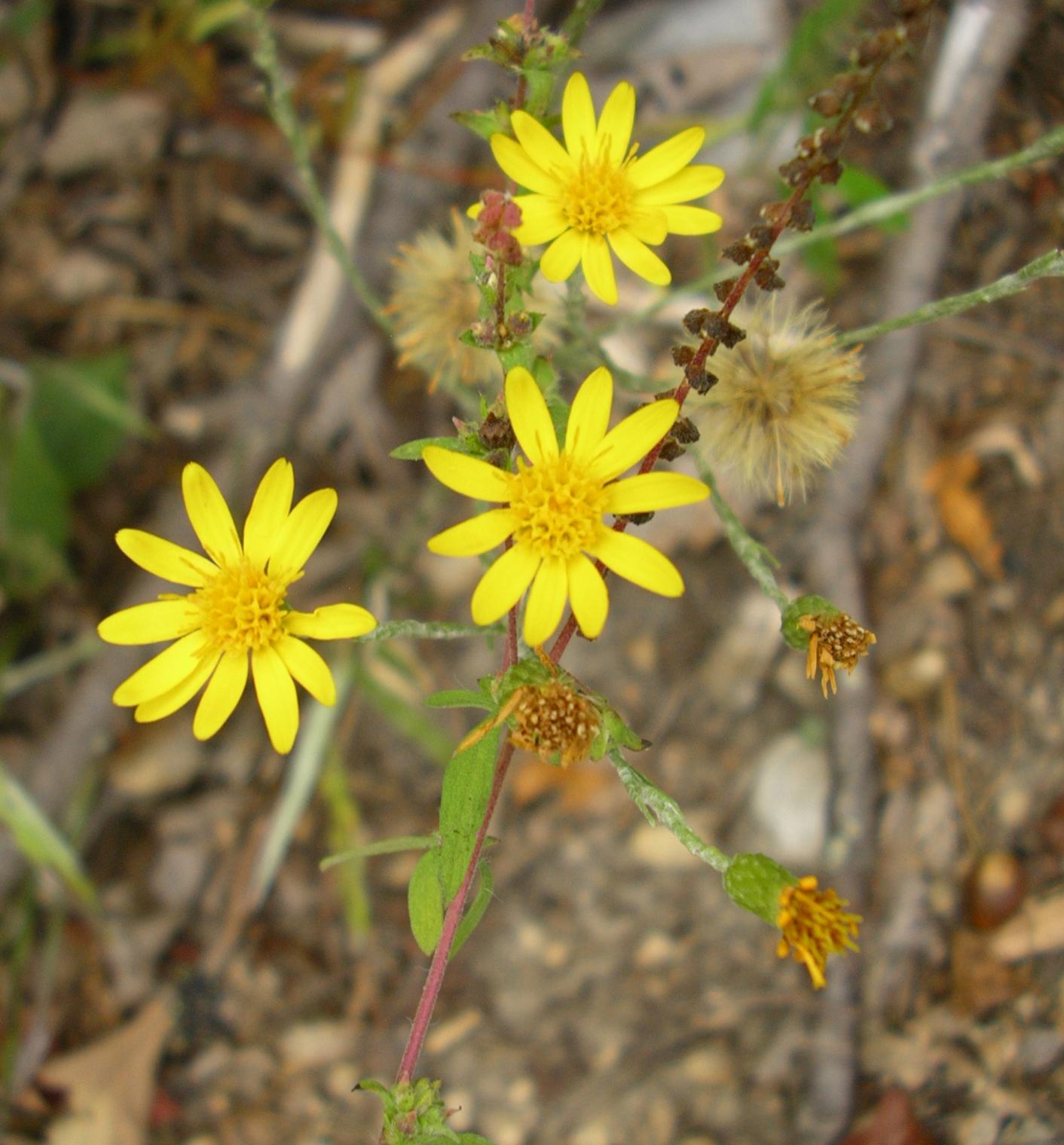 Maryland Native Plants: Tennessee Smart Yards Native Plants